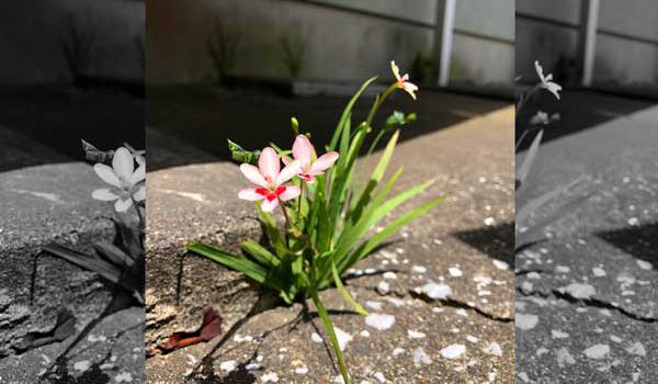 過酷な環境でも美しく咲く花