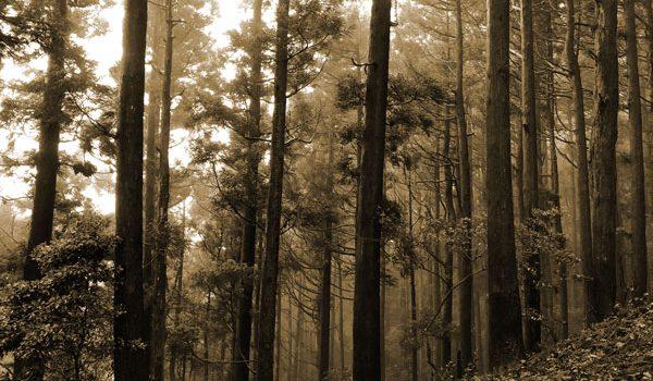 霧の中の山道