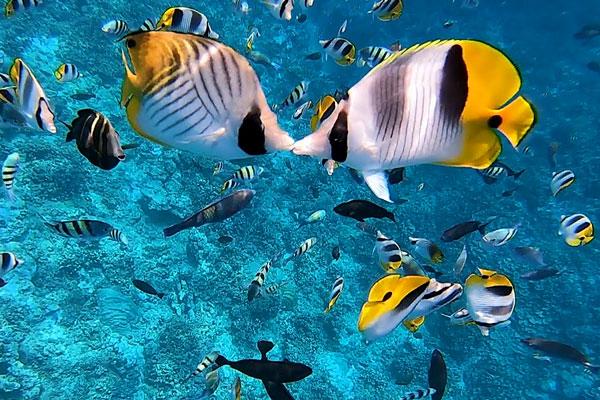 ダイビングではたくさんの魚と泳げます